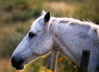 Free Photo of Cute Horse