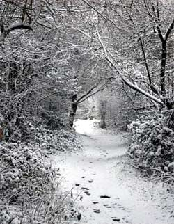 Photo showing Winter Scene